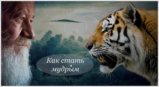 Мудрый тигр